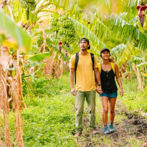 Farm to Forest — Hawaii Forest & Trail